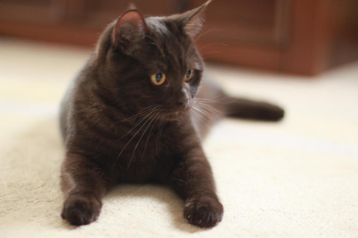 Junge Katzendame № 12
