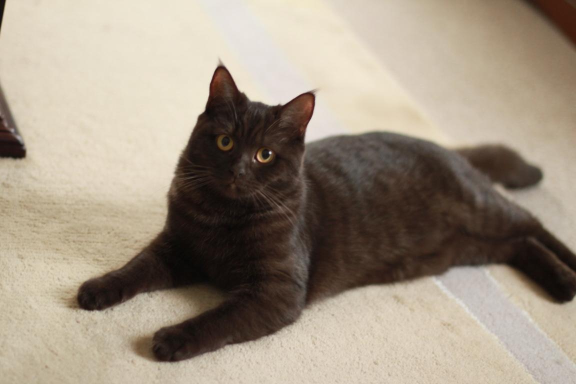 Junge Katzendame № 13