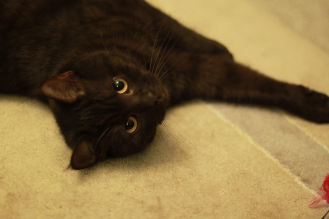 Junge Katzendame № 14