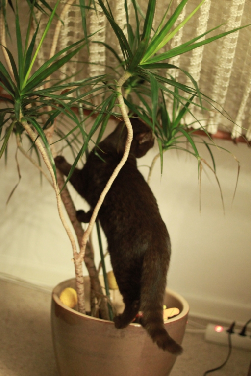Junge Katzendame № 25
