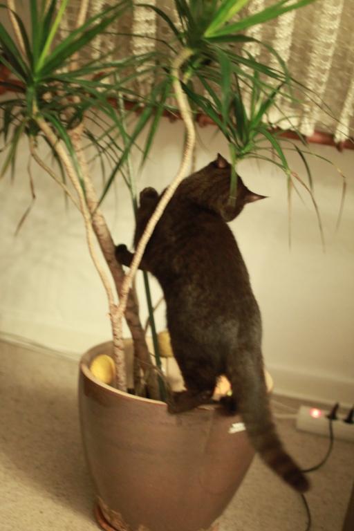 Junge Katzendame № 26