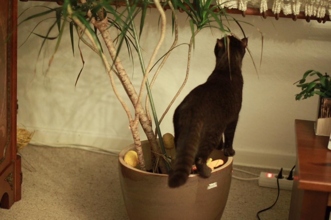 Junge Katzendame № 24