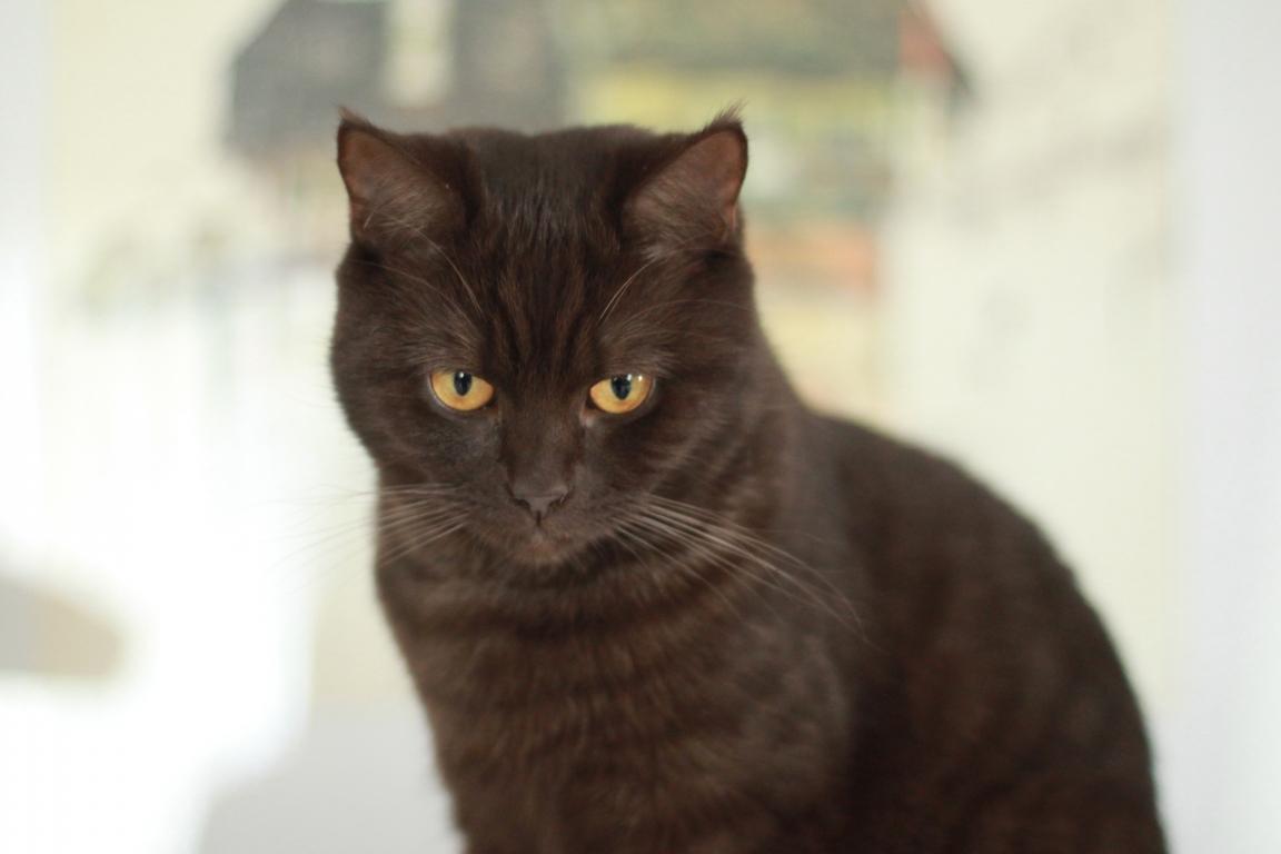 Junge Katzendame № 2