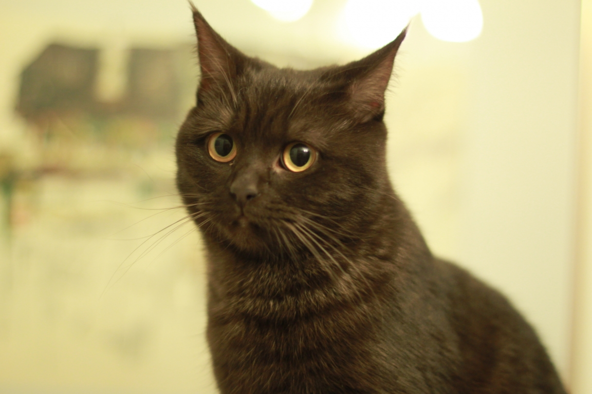 Junge Katzendame № 15