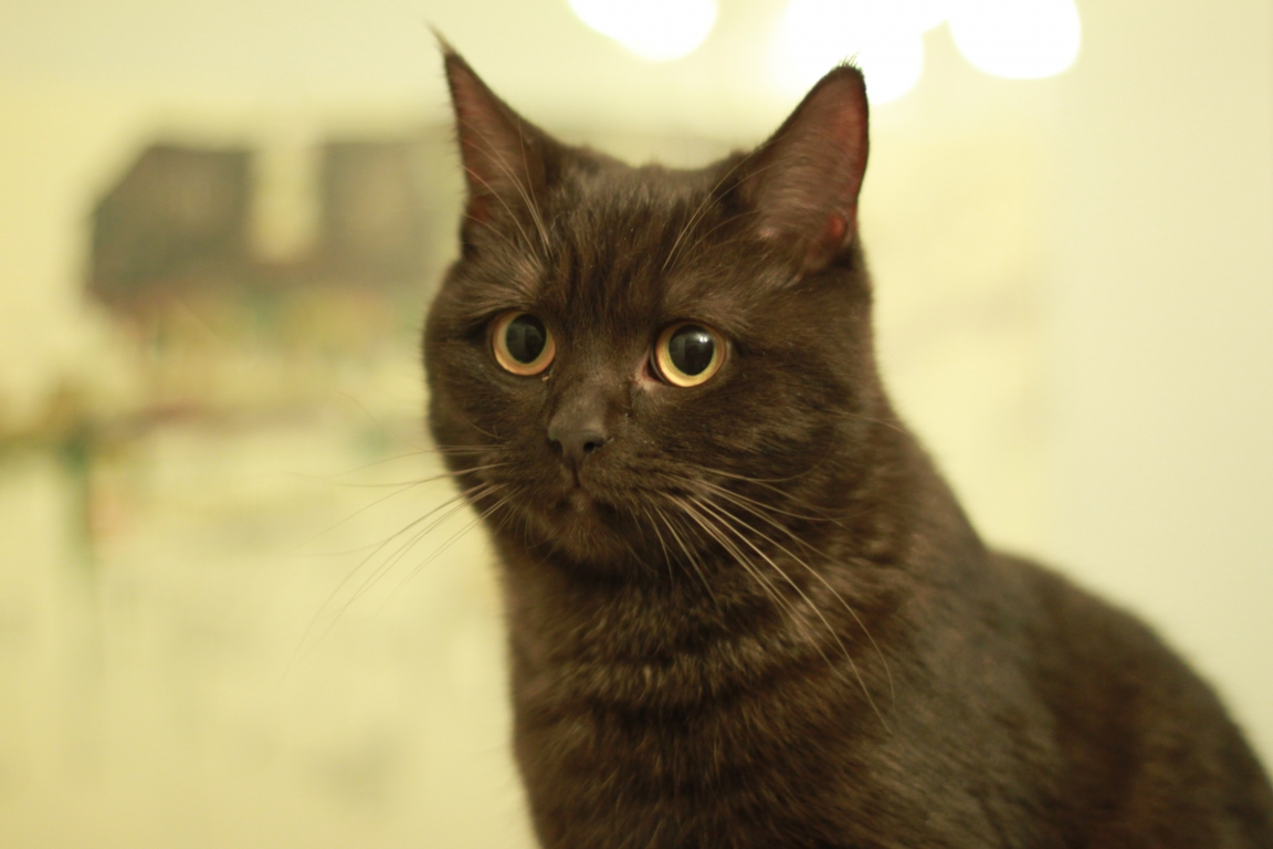 Junge Katzendame № 16