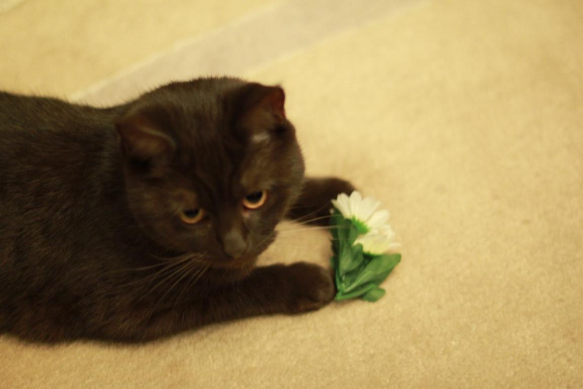 Junge Katzendame № 18