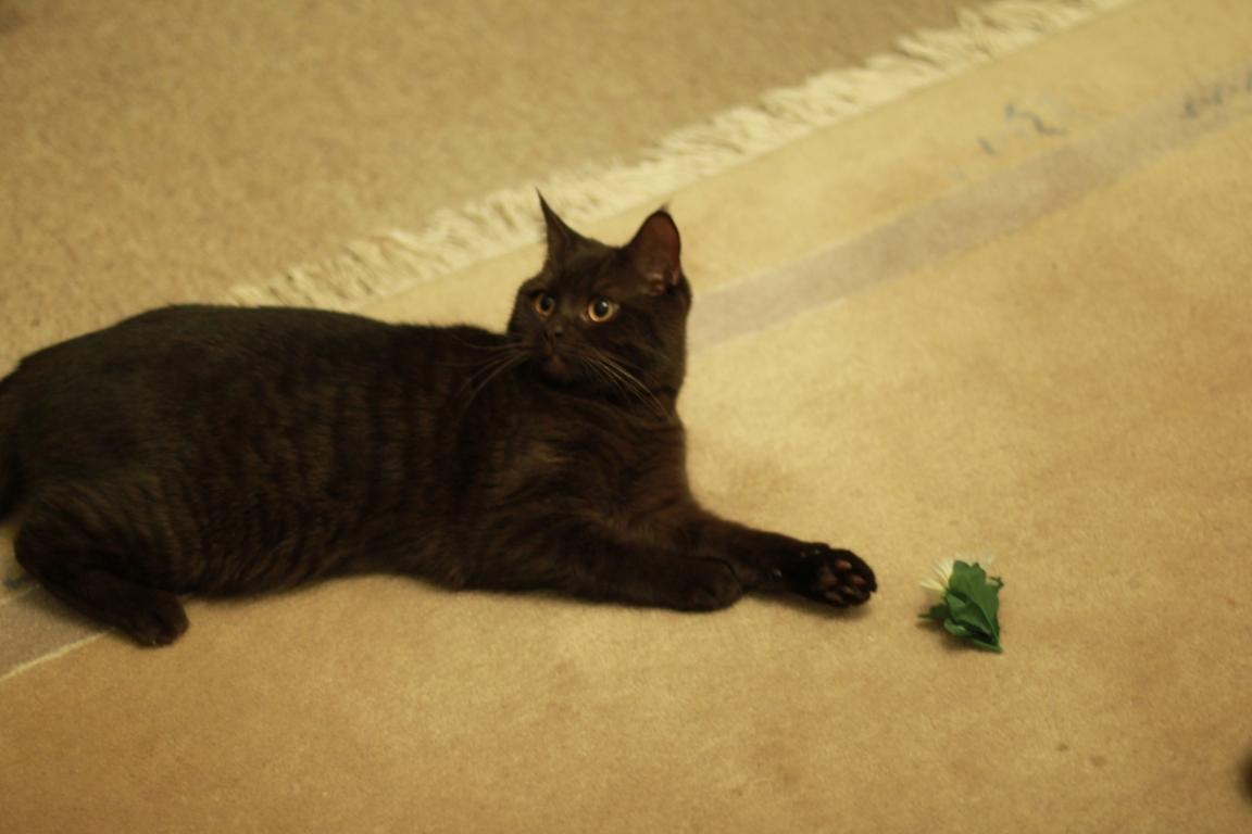 Junge Katzendame № 19