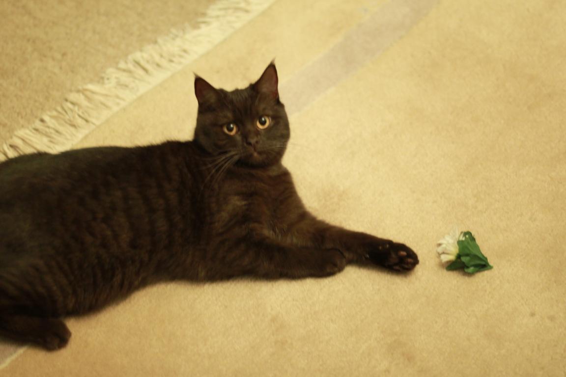 Junge Katzendame № 20