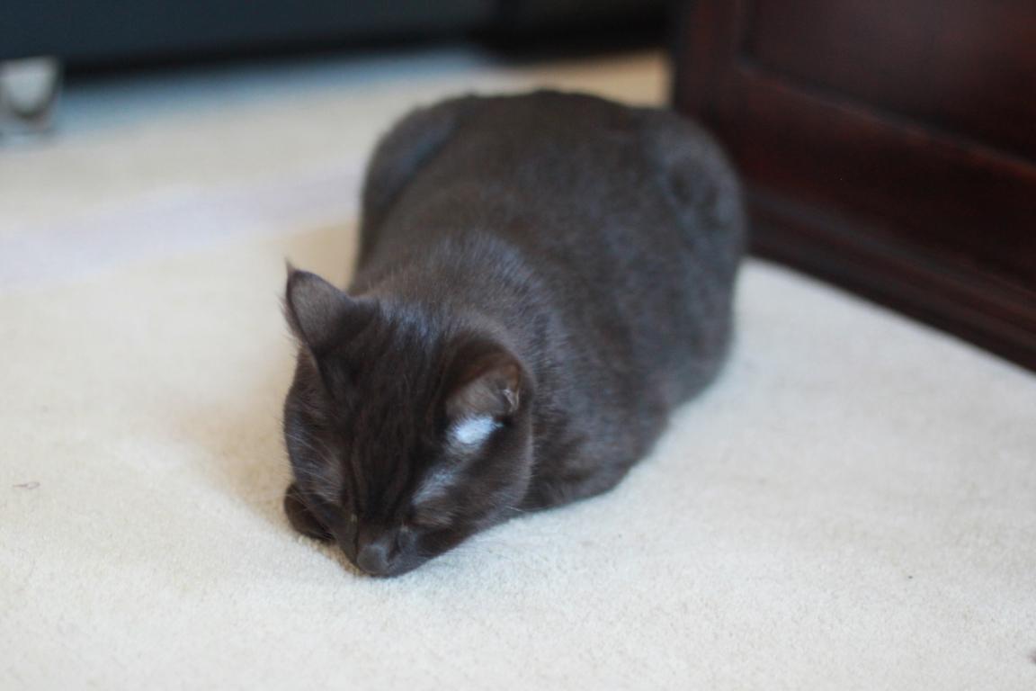 Junge Katzendame № 21