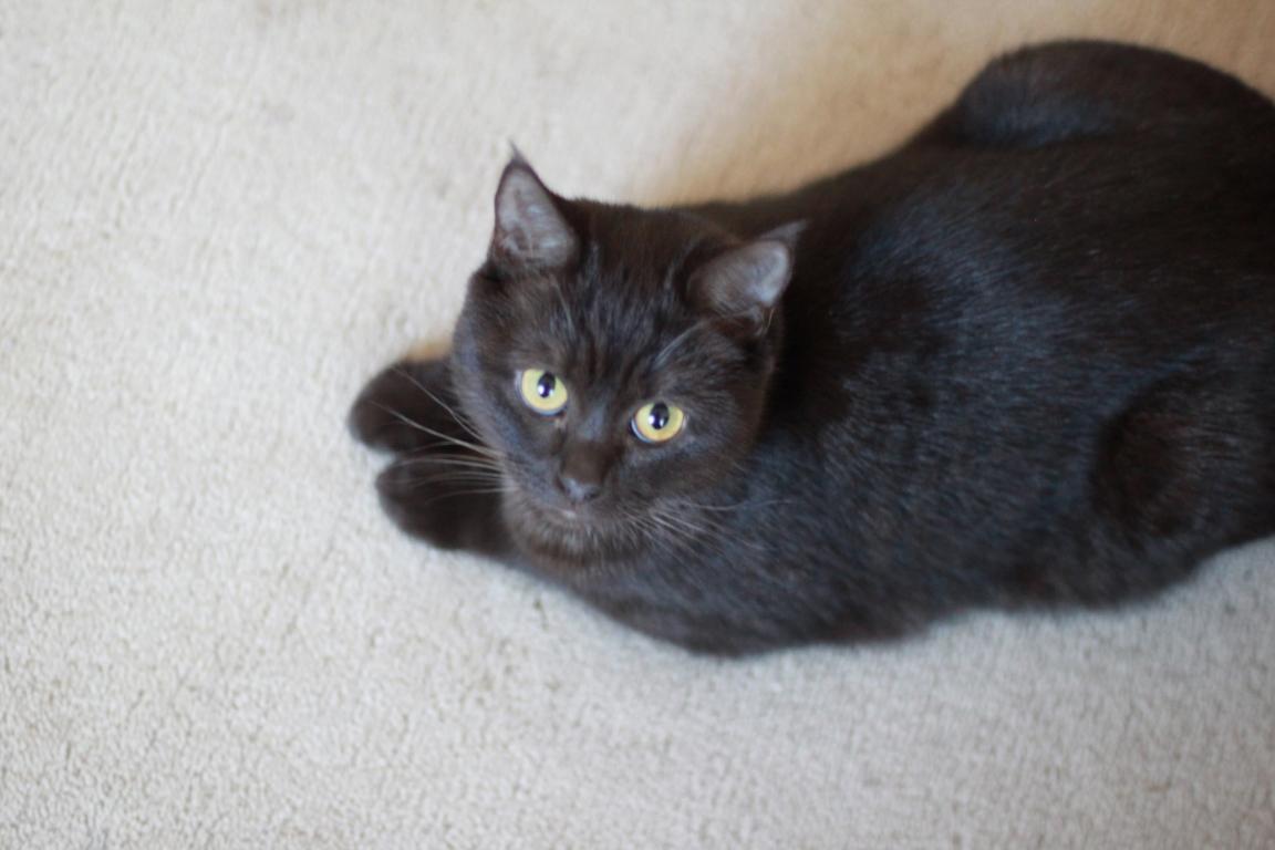Junge Katzendame № 22