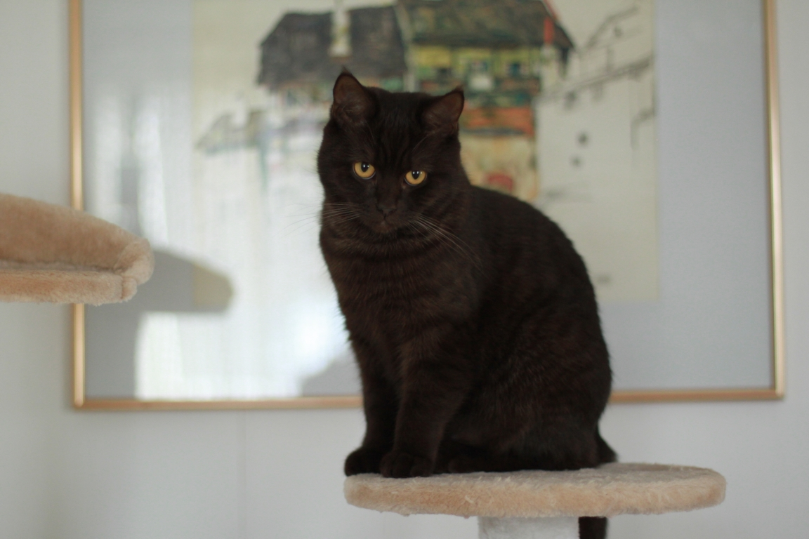 Junge Katzendame № 3