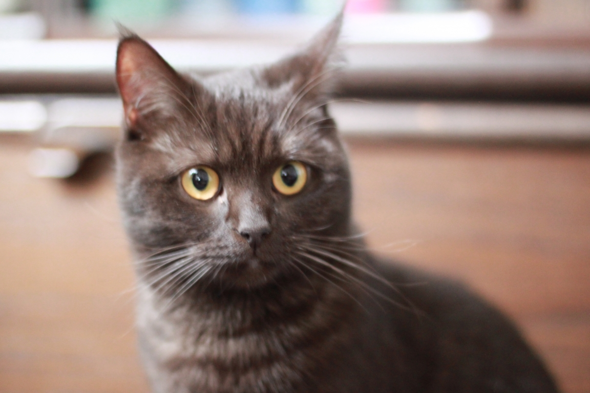 Junge Katzendame № 23