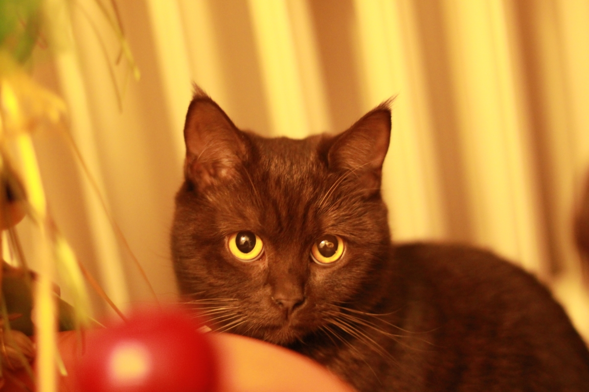 Junge Katzendame № 4
