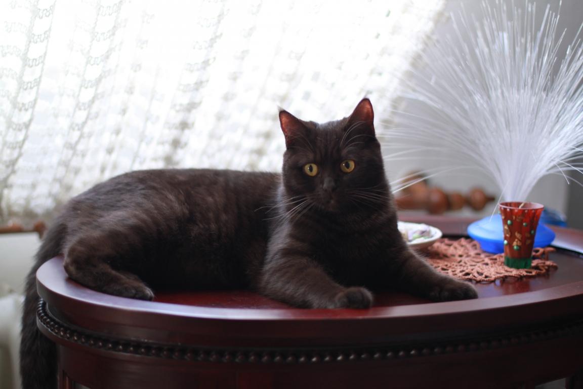 Junge Katzendame № 5