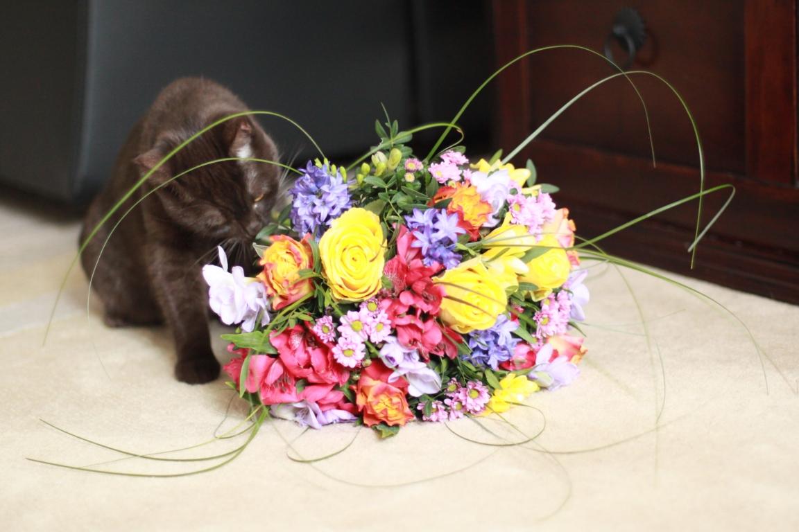 Junge Katzendame № 6