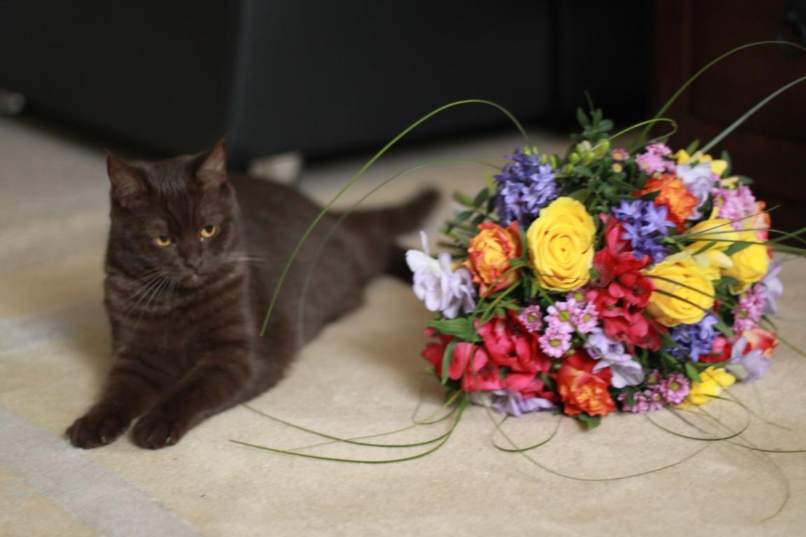 Junge Katzendame № 7