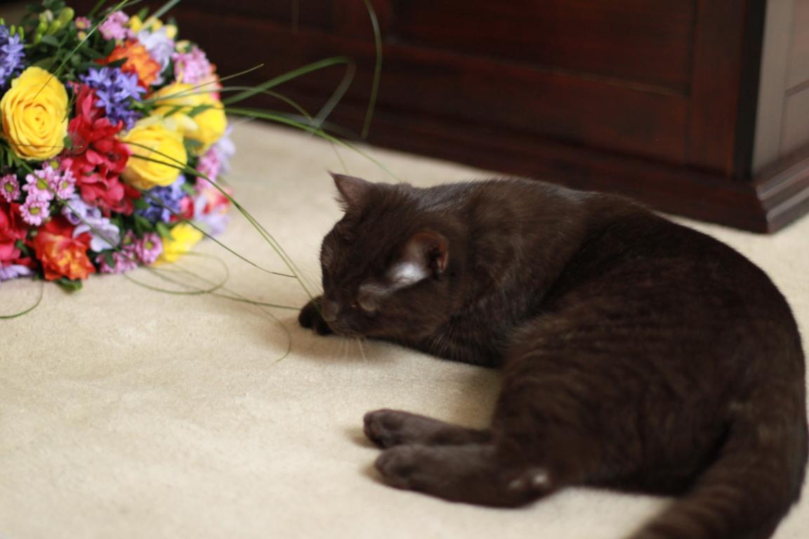Junge Katzendame № 8