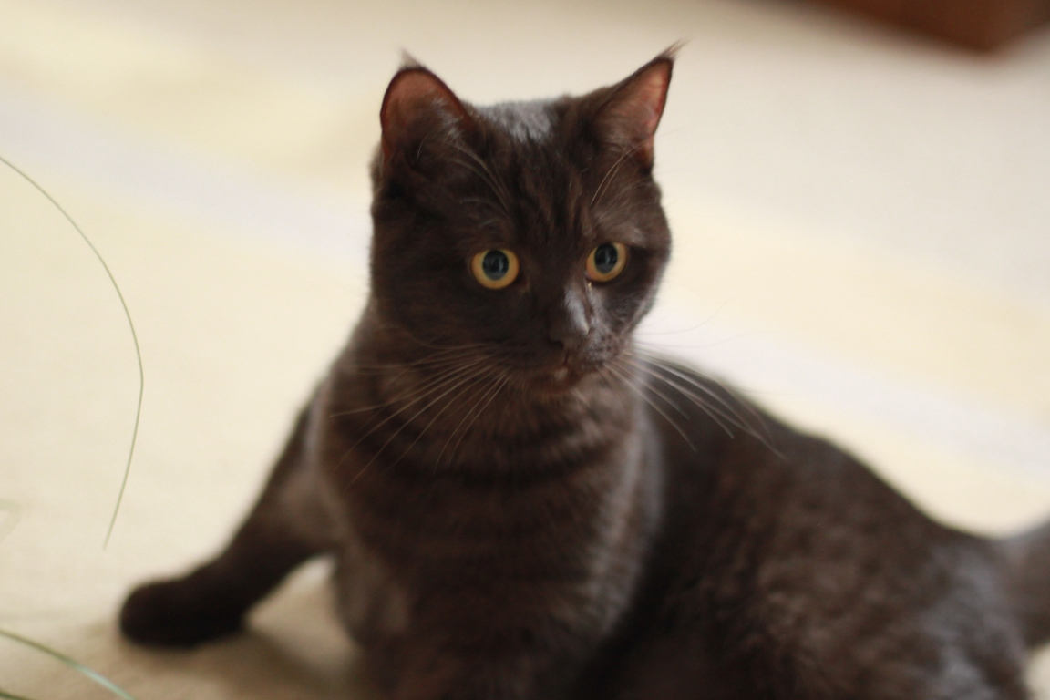 Junge Katzendame № 9