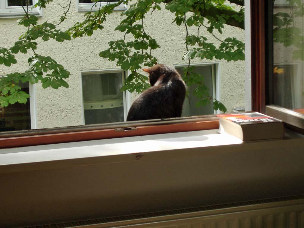 Draußen auf dem Fensterbrett